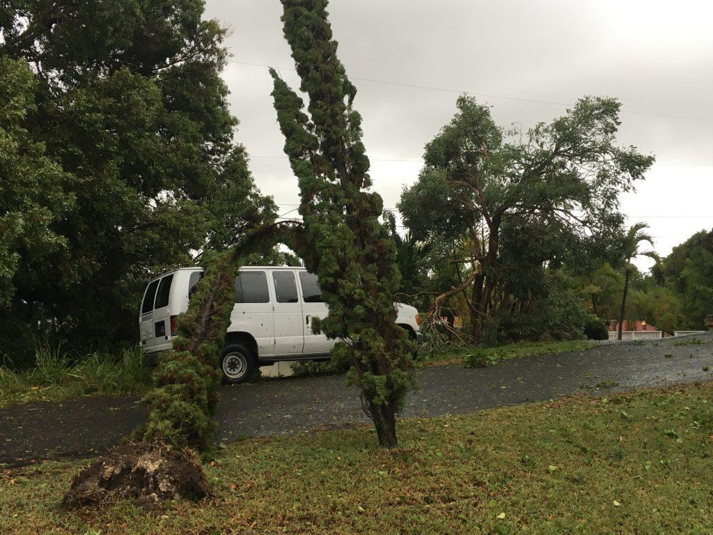 Trees on Vans